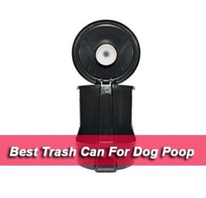 Best Trash Can For Dog Poop