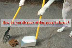 How do you dispose of dog poop at home?
