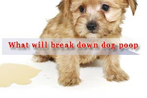 What will break down dog poop?