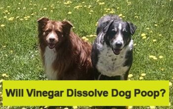 Will Vinegar Dissolve Dog Poop