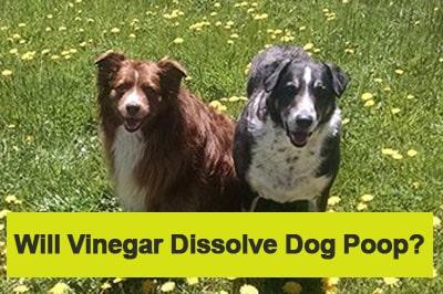 Will Vinegar Dissolve Dog Poop